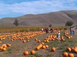 Napa Pumpkin Patch Hours by Great Pumpkin Patches In Sonoma County Sonoma County Official Site