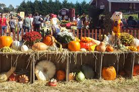 Pumpkin Picking Places In South Jersey by Where To Go Pumpkin Picking And Apple Picking In Nj