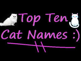 popular cat names 10 popular cat names in the world