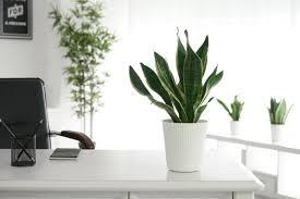 homeoffice prima klima mit zimmerpflanzen dsh das
