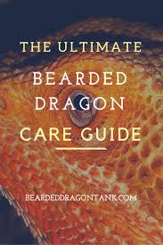 the ultimate bearded dragon care sheet bearded dragon tank
