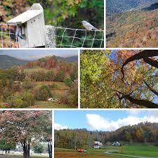 Christmas Tree Farm For Sale Boone Nc by Mast Boone Nc
