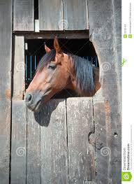 Horse Looking Out Of Barn Window Stock Image - Image: 23150453 Just Horses In The Barn Horse Portraits Treading George Washingtons Mount Vernon How Your Horse Learns By Watching You Owners Resource In A Painted Petcustom Pet Patings Two Cadian And Snow Weather Stock Video Footage East Bay Real Estate The West Side Story Barns For Miniature Small Horizon Structures Cooling Horses Archives Windmill Ceiling Fans Offtopic Monday Photos Peace Love Fostering Arabian Stable Looking Over The Barn Door Nice Using Premise Sprays To Protect Absorbine