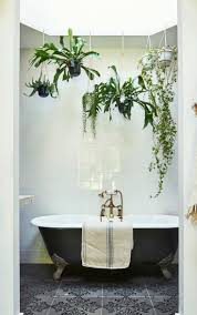 Plants For Bathroom Feng Shui by Best 25 Bathrooms With Plants Ideas On Pinterest