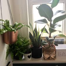 Small Plants For The Bathroom bathroom design magnificent autumn plants plants good for the