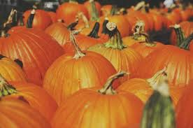 Mission Valley Pumpkin Patch by 10 Pumpkin Patches And Farms In San Diego La Jolla Blue Book Blog