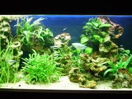 aquarium d eau douce aquarium eau douce photos