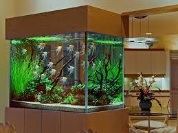 aquarium d eau douce aquarium eau douce tropical prix plante aquarium vrac it