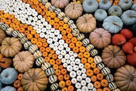 Largest Pumpkin Ever Grown 2015 by Ingredient Of The Season Pumpkins