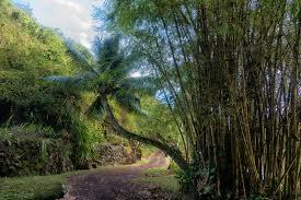 Allerton Garden Tour – Kauai Island