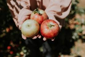 Pumpkin Picking Ct Easton by The Most Instagram Worthy Apple Picking Spots Julep By Triplemint