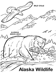 Wildlife Coloring Books At Book Online