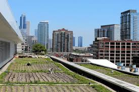 Rooftop farms appealing but will they catch on Chicago Tribune