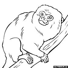 Pygmy Marmoset Monkey Coloring Page