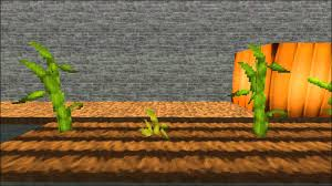 Stages Of Pumpkin Growth by Minecraft Pumpkin Growing Time Lapse Youtube