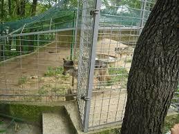 l enclos d un de loups la tristesse picture of zoo
