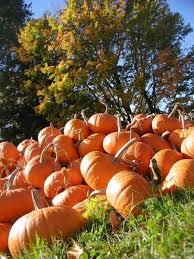 Portland Maine Pumpkin Patch by 33 Best Fall Foliage Images On Pinterest Autumn Leaf Color