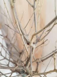 was ist das an meinem olivenbaum garten oliven botaniker