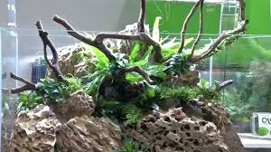 My-fish - Freestyle Aquascaping By Oliver Knott - Interzoo 2014 ... Aquascaping Artist Oliver Knott Scapingaquarium Pinterest Schwimmende Stein Steine Im Aquarium By Knott Youtube Aquascapi Sequa Interzoo 2012 Feat Chris Lukhaup Live Part 3 The Island Aquascape Step Aquariology With At The Koelle Zoo Heidelberg New Project Photo Editor Online And Editor Made Teil 1 Inspiration Tips Tricks Love Aquascaping Octopus Aquarium Via Aquac1ubnet