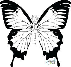 Printable Coloring Pictures Butterflies Unique Pages Book Gallery Ideas Free Of Flowers And