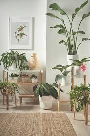 mit pflanzen dekorieren natur für dein zuhause wohnzimmer