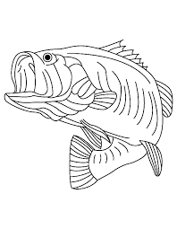 Stunning Bass Fish Coloring Pages Fishing For