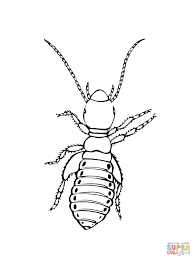 Click The Louse Insect Coloring Pages