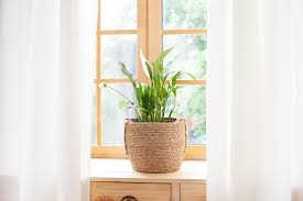 zehn zimmerpflanzen die wenig licht brauchen solabiol