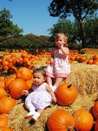 Pumpkin Patch Austin Tx 2015 by 12 Things Everyone In Texas Does During The Fall