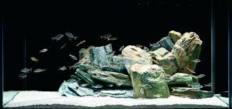 large aquarium rocks for sale aquascaping with rocks homedesignpicture win