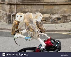 Three Pet Barn Owls On Mobility Scooter In Middlesbrough, England ... You Me Pitch Roof Dog Kennel Small Petbarn Pet Barn Leads On Pet Christmas Gifts Australian Newsagency Blog Amazoncom Petmate Houses Supplies Petbarn Pty Ltd Chatswood Nsw Merchant Details Double Medium Blacktown Mega Centre The Local Business Rothwell Redcliffe Australia Signs Store Stock Photo My 3 Rescue Chis Decked Out For December Holidays 2015 Fab Hermit Crab Enclosure Vanessa Pikerussell Flickr Pleasant Royal Canin German Spherd Food 12kg Pet2jpg