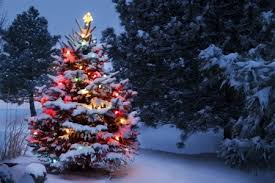 tips for hanging outdoor christmas lighting outdoor trees