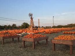 Pumpkin Patches Near Temple Texas by 10 Great Pumpkin Patches In Texas