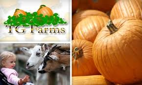 Pumpkin Patches In Okc by Tg Farms Oklahoma City Deal Of The Day Groupon Oklahoma City