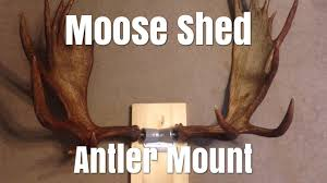 diy shed antler mounting van dyke s shed connector youtube
