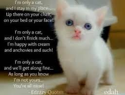 cat quotes 50 cat quotes that perfectly explain your for kitties quotes