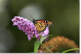 Attracting Insects To Your Garden by How To Create A Backyard Nature Preserve Desertusa