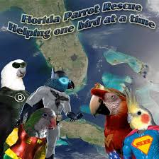 Parrot Caught Singing Bodies Hit The Floor by Animal Superheroes And A Contest Sponsored By The Alex Foundation