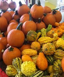 Pumpkin Patch Toledo Ohio by Tom Strain U0026 Sons Farm Market And Garden Center Toledo Oh For
