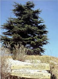 Threshing Floor Definition In Spanish by Reading The Landscape Neot Kedumim The Biblical Landscape