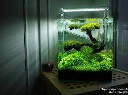 aquarium d eau douce aquariums d eau douce aquarium cube animal