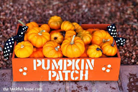Pumpkin Patch Near Bay Area by Best Pumpkin Patches In Houston Axs