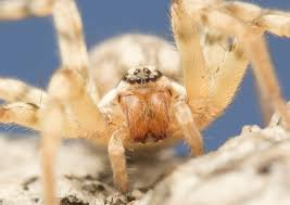 Remains Of The Day Spiders by Agelenidae Spiderbytes