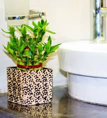 Best Plant For Bathroom Feng Shui by Plants Appealing Home Plant Bathroom With Vessel Sink Plant