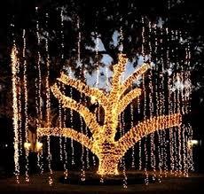Outside Holiday Tree Lights