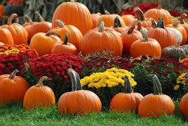 Mayfield Pumpkin Patch by Stone County Clerk U0027s Office