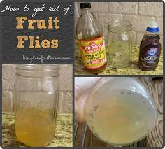 Little Flies In Bathroom Drain by Small How To Kill Small Flies In Kitchen How To Get Rid Of Flies