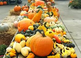 Spring Hope Pumpkin Festival Schedule by 22 Activities To Enjoy During Fall In Nantucket Fisher Real
