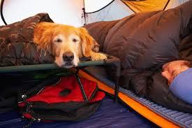 kuranda vs coolaroo dog beds pets