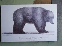 Drawn Grizzly Bear California Flag 15